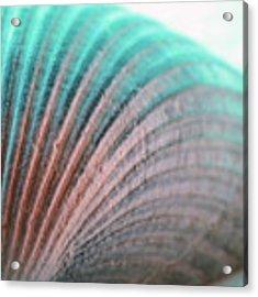 Seashell In Turquoise  Acrylic Print by Angela Murdock