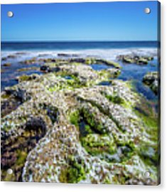 Seaweed And Salt. Acrylic Print by Gary Gillette
