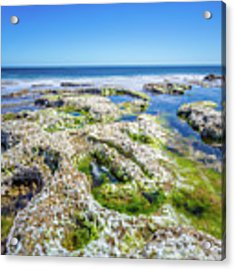 Seaweed And Salt Landscape. Acrylic Print by Gary Gillette