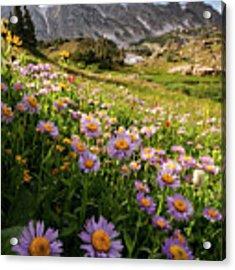 Snowy Range Flowers Acrylic Print by Emily Dickey