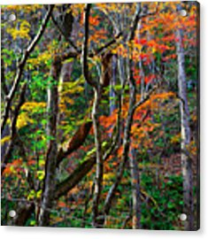 Splash Of Autumn Acrylic Print by Brad Brizek