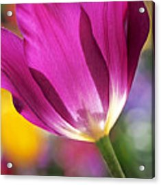 Spring Tulip - Square Acrylic Print by Rona Black