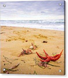 Starfish Acrylic Print by Gary Gillette