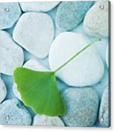 Stones And A Gingko Leaf Acrylic Print