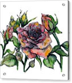 Stylized Roses Acrylic Print by Lauren Heller