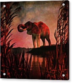 The Drinking Elephant Acrylic Print by Jan Keteleer