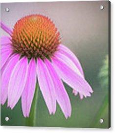The Flower At Mattamuskeet Acrylic Print by Cindy Lark Hartman