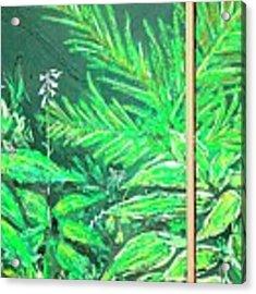 The Green Flower Garden Acrylic Print by Darren Cannell