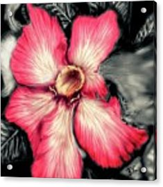 The Red Flower Acrylic Print by Darren Cannell
