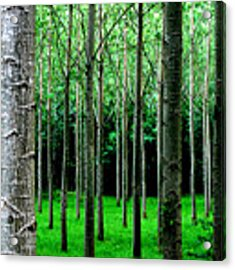 Trees In Rows Acrylic Print by Julian Perry