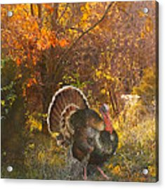 Turkey In The Woods Acrylic Print by John Dyess