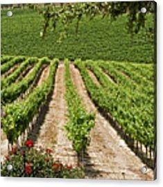 Vineyards In The Galilee 2 Acrylic Print by Arik Baltinester