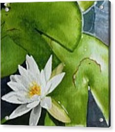 Water Lilly Acrylic Print by Gigi Dequanne