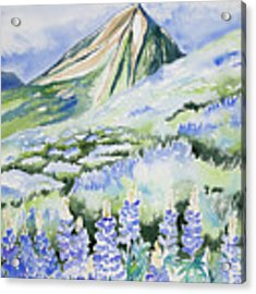 Watercolor - Crested Butte Lupine Landscape Acrylic Print by Cascade Colors