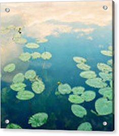 Waterlilies Home Acrylic Print by Priska Wettstein