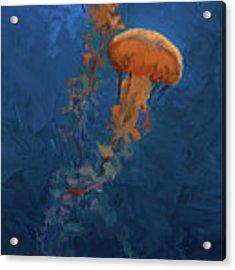 Weightless - Pacific Nettle Jellyfish Study  Acrylic Print by Karen Whitworth