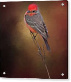 Where's That Bug? Acrylic Print by Evelyn Garcia