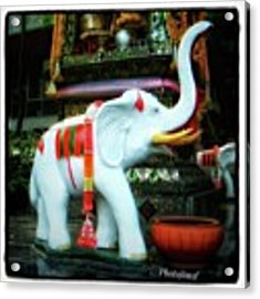 White Elephant. Meaning A Big Expensive Acrylic Print by Mr Photojimsf