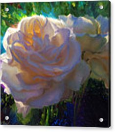 White Roses In The Garden - Backlit Flowers - Summer Rose Acrylic Print by Karen Whitworth