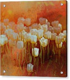 White Tulips Acrylic Print by Richard Ricci