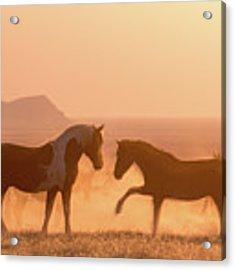 Wild Horse Glow Acrylic Print by Wesley Aston
