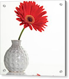 Red Gazania Flower On A White Stylish Vase. Creative Still Life  Acrylic Print by Michalakis Ppalis