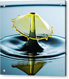 Water Drop Acrylic Print by Nicole Young
