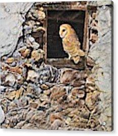 A New Home Barn Owl Acrylic Print by Alan M Hunt