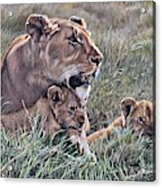 A Quiet Moment Lioness And Lion Cubs Acrylic Print by Alan M Hunt