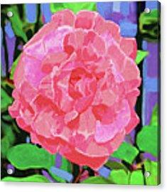 A Rose With Heart Acrylic Print by Deborah Boyd