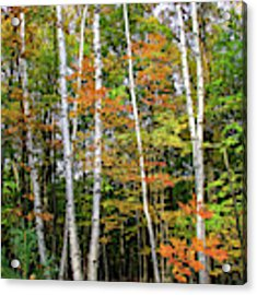 Autumn Grove, Vertical Acrylic Print by Dawn Richards