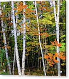 Autumn Grove, Wisconsin Acrylic Print by Dawn Richards