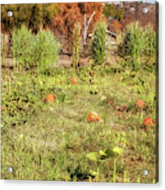 Autumn In The Pumpkin Patch Acrylic Print by Alison Frank