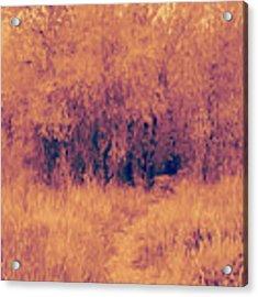 Autumn Mystery Acrylic Print by David King
