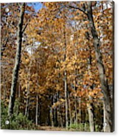 Autumn Pathway Acrylic Print by Dylan Punke