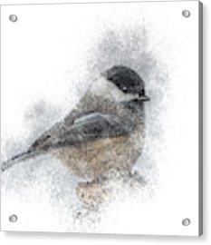 Black-capped Chickadee Perch Acrylic Print by Patti Deters