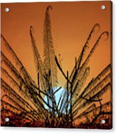 Burmese Fern At Sunset Acrylic Print by Chris Lord