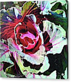 Cabbage Acrylic Print by John Dyess