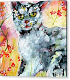 Cat Portrait My Name Is Hobo Acrylic Print by Ginette Callaway