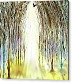 Cathedral Forest Acrylic Print by Darren Cannell