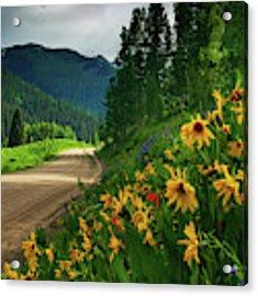 Colorado Wildflowers Acrylic Print by John De Bord