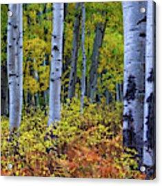 Colors Of October Acrylic Print by John De Bord