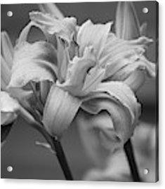 Day Lily Yellow Filter Acrylic Print by Jeni Gray