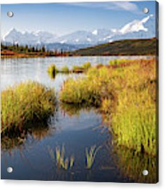 Denali Wonder Acrylic Print by Tim Newton