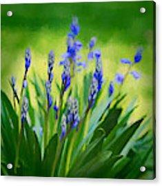 Essense Of Spring Acrylic Print by Kristi Swift
