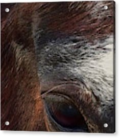 Eye Of A Horse  Acrylic Print by Shelli Fitzpatrick
