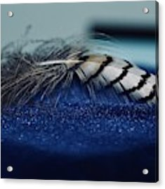 Feather Acrylic Print by Ann E Robson