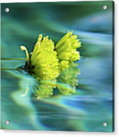 Floating Daisies 1 Acrylic Print by Dawn Richards