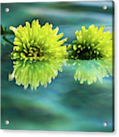 Floating Daisies 2 Acrylic Print by Dawn Richards