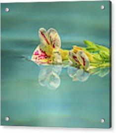 Floating Petunia Acrylic Print by Dawn Richards